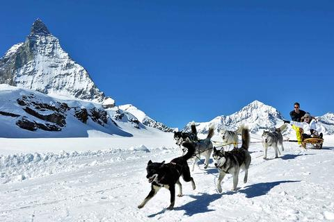 Husky Slediging in front of the Matterhorn