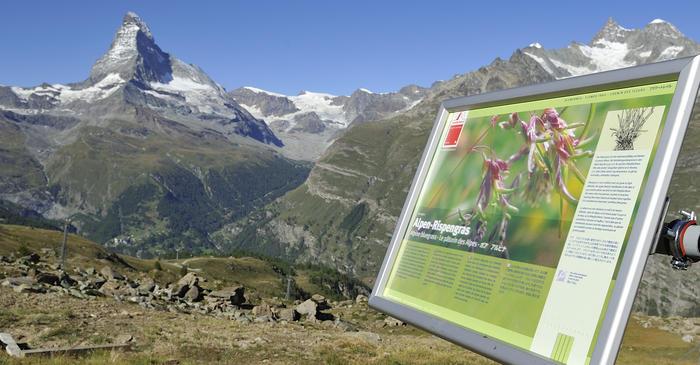 Kletterausrüstung Zermatt : Bergsteigen klettern in der schweiz zermatt